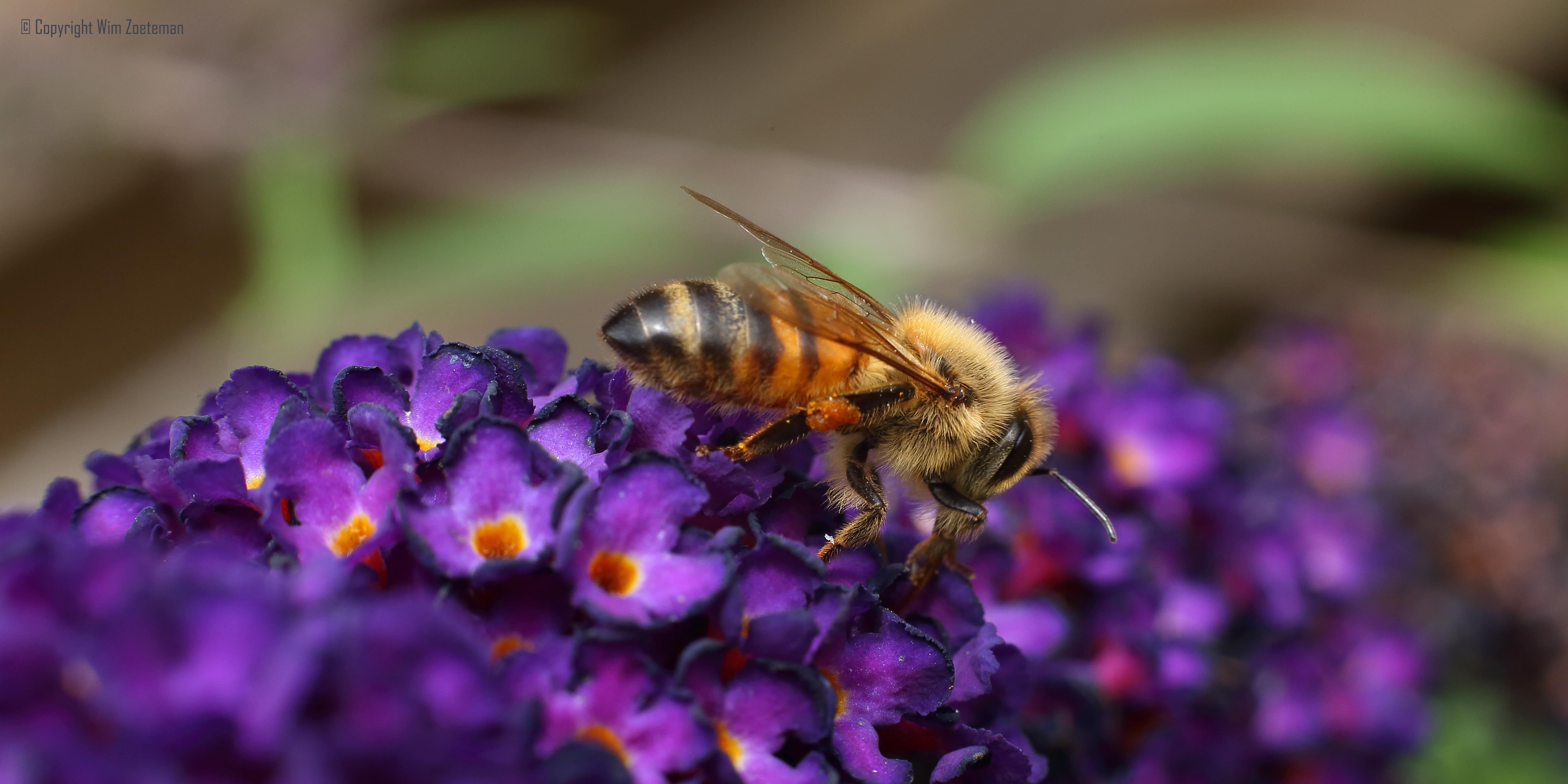 IMG_3822 Honey