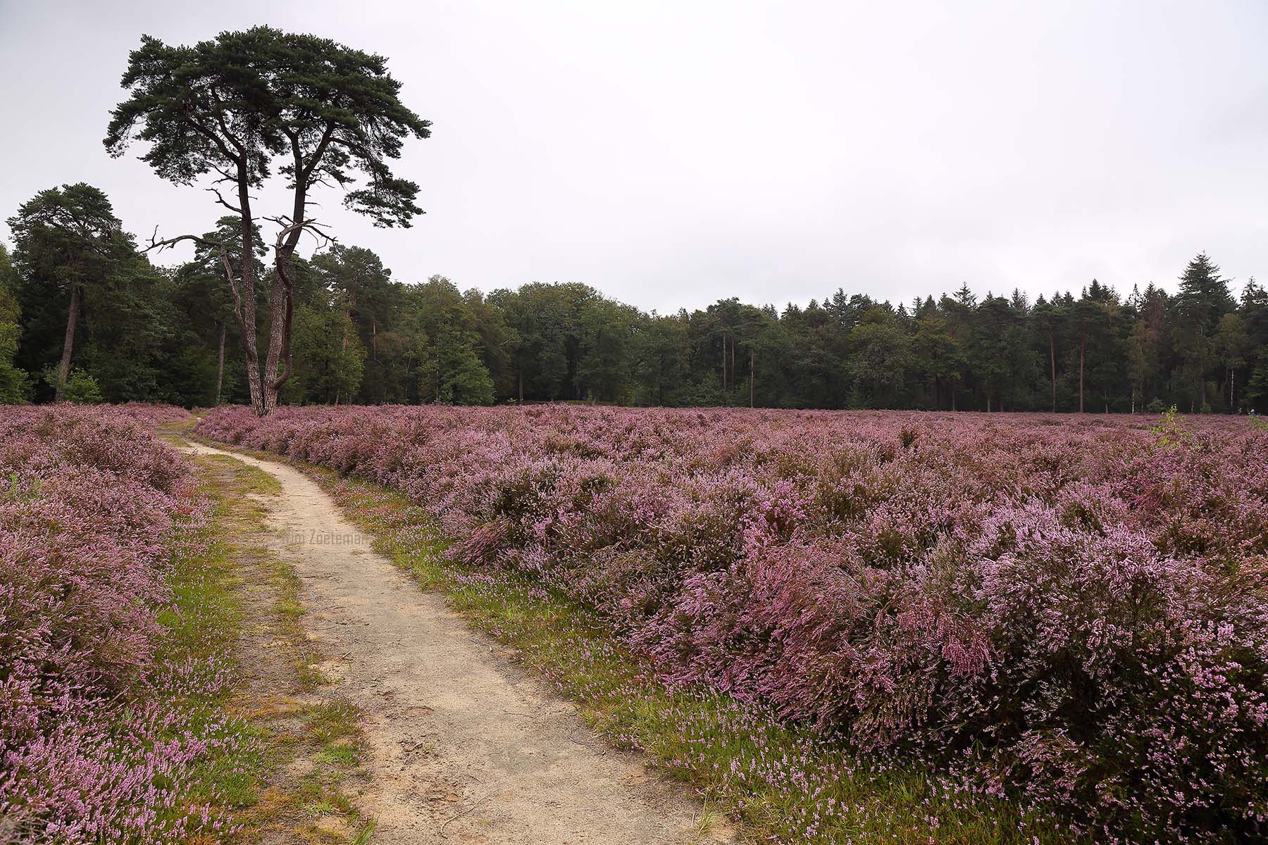 IMG_7753-Heide-Windmolenveld